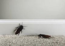 Самостоятельное уничтожение тараканов